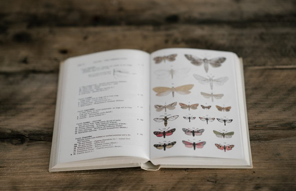 book with photos images of butterflies; book of insects