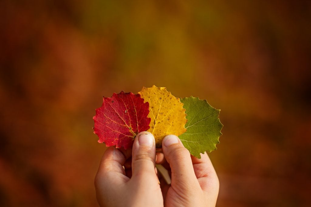 colored leaves in child's hands