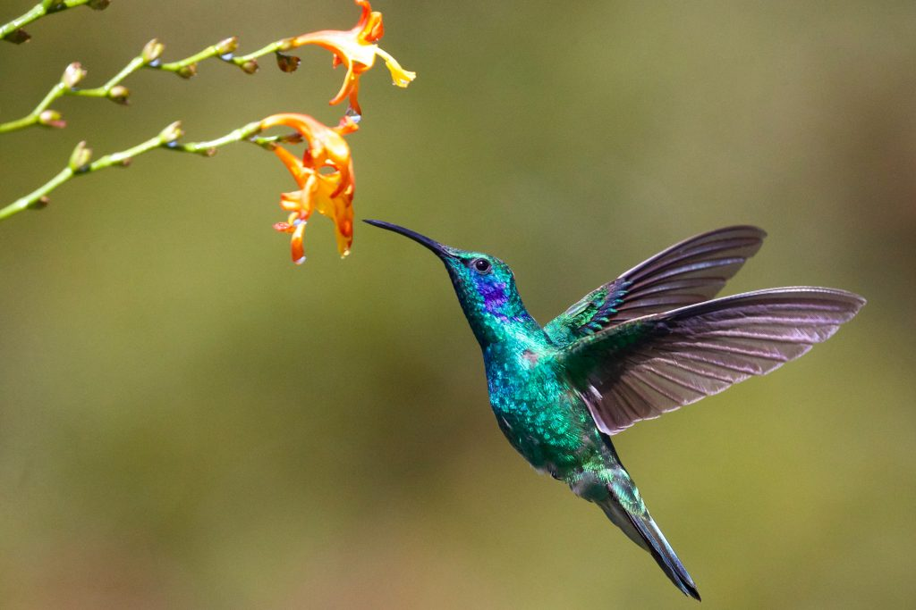 Fun facts: hummingbirds are the only birds that can fly backwards