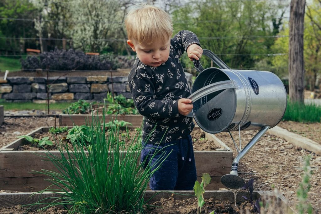 boy watering raised bed with large watering can