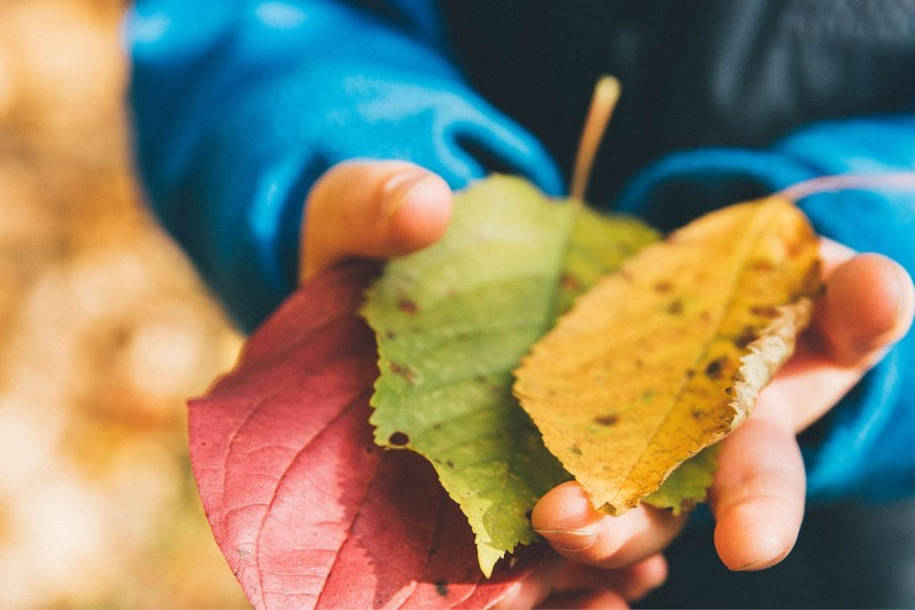 boy holding colorful leaves in autumn / fall