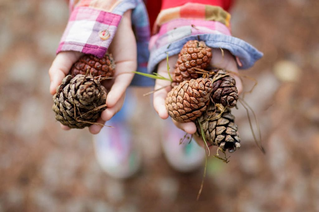 child holding pinecone collection